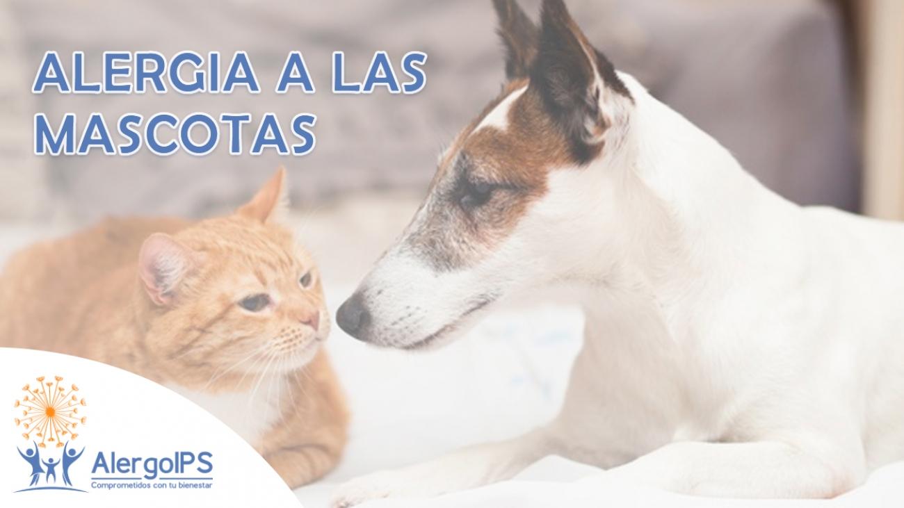 Alergia a las mascotas - Alergoips